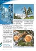 Die Fichte – - Steiermärkische Landesforste - Seite 3