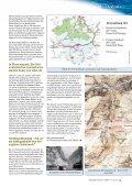 Die Fichte – - Steiermärkische Landesforste - Seite 6