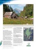 Die Seite der Steiermärkischen Landesforste - Seite 5