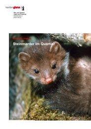Merkblatt Marder [PDF, 2.00 MB] - Kanton Glarus