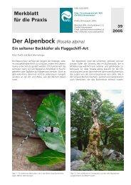 Alpenbock - WSL