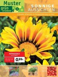 AUSSICHTEN SONNIGE - Hoeren Garten und Landschaftsbau