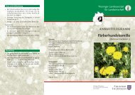 Färberhundskamille (Anthemis tinctoria L.) - Thüringer ...