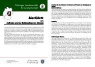 Merkblatt - Thüringer Landesanstalt für Landwirtschaft