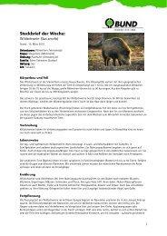 Steckbrief der Woche: Wildschwein (Sus scrofa) - BUND