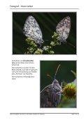 einen ausführlichen Bericht von Horst Jetter, Alika Ludwig, Sonja ... - Page 2