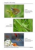 einen ausführlichen Bericht von Horst Jetter, Alika Ludwig, Sonja ... - Page 6