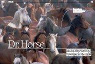 Dr. Horse
