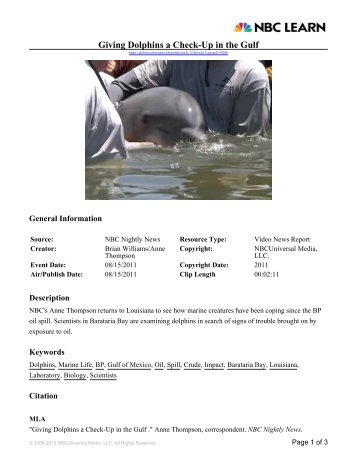 Giving Dolphins a Check-Up in the Gulf