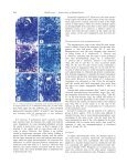 Comparative Ovule and Megagametophyte ... - Annals of Botany - Page 4