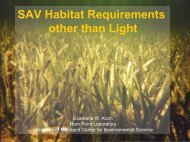 SAV Habitat Requirements other than Light - Chesapeake Bay ...