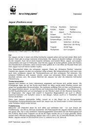 Jaguar (Panthera onca) - WWF Schweiz
