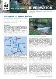 Revitalisierung der Wyna bei Menziken - WWF Schweiz