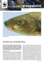 Factsheet Nase - WWF Schweiz