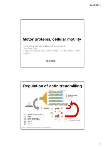 Motor proteins, cellular motility Regulation of actin treadmilling