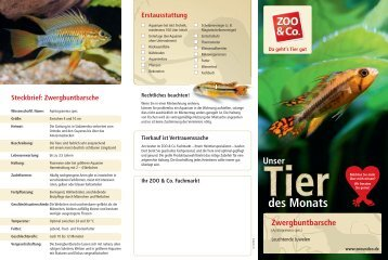 Flyer Tier des Monats, Zwergbuntbarsche - Zoo & Co.