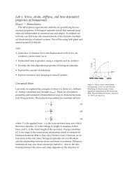 Lab 3: Stress, strain, stiffness, and time-dependent properties of ...