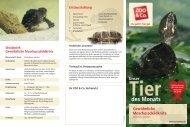 Gewöhnliche Moschusschildkröte - Zoo & Co.