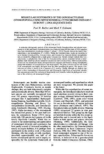 Molecular Systematics of the Gonodactylidae ... - AToL Decapoda