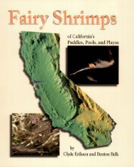Fairy Shrimps