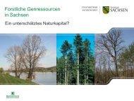 Forstliche Genressourcen in Sachsen – Ein unterschätztes ...