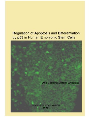 Regulation of Apoptosis and Differentiation by p53 in Human ...