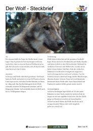 Der Wolf - Steckbrief