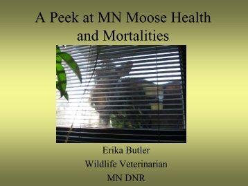 MN Moose Health and Mortalities - Minnesota Department of Natural ...
