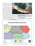 The Commission's Walleye Stocking Program - Pennsylvania Fish ... - Page 4