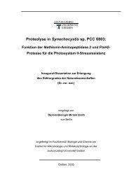 Proteolyse in Synechocystis sp. PCC 6803: Funktion der Methionin ...