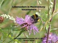 Lebensadern in Mecklenburg-Vorpommern (2,82MB)