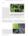 Control of axillary bud initiation and shoot architecture in ... - Page 5