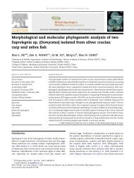 Morphological and molecular phylogenetic analysis of two ...