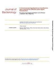 A Chromosomal Agrobacterium tumefaciensGene Required for ...