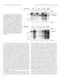 Differential Cellular Handling of Defective Arginine Vasopressin (AVP) - Page 5