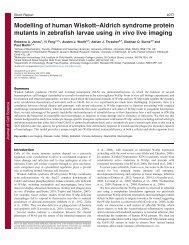 Modelling of human Wiskott–Aldrich syndrome protein mutants in ...