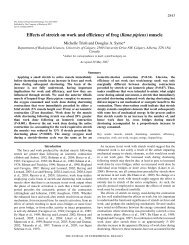 Effects of stretch on work and efficiency of frog (Rana pipiens) muscle