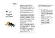Wespen - Informationen und praktische Tipps - Kreis Unna