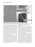 Analysis of proteome response to the mobile phone radiation in two ... - Page 4