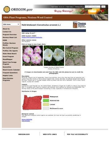 field bindweed (Convolvulus arvensis L.)