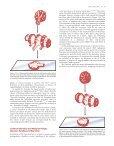 Large Intestine (Colon) - Axon - Page 7