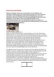 RADIO Landschildkröte