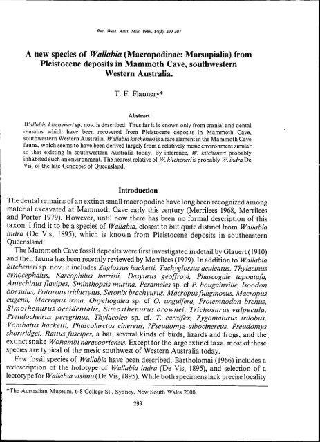 a new species of wallabia - Western Australian Museum