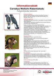 Information Sheet - Carnaby's Cockatoo - Western Australian Museum