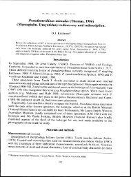 Pseudantechinus mimulus (Thomas, 1906) (Marsupialia: Dasyuridae)