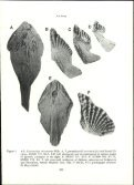 a redescription of the lungfish eoctenodus hills 1929, with ... - Page 5