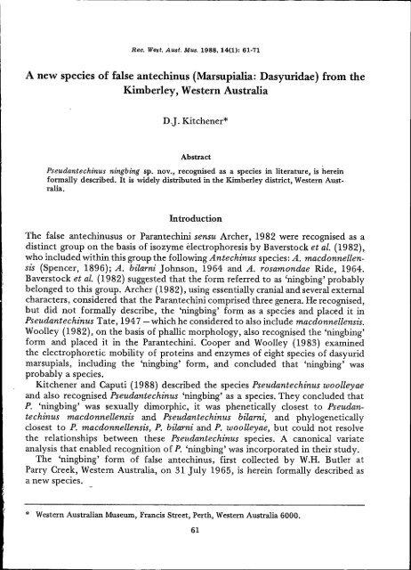 a new species of false antechinus (marsupialia dasyuridae)