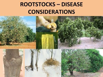 Rootstocks - Disease Considerations - Pat Barkely.pdf