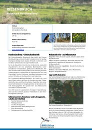 RIESENBRUCH - NABU-Stiftung Nationales Naturerbe