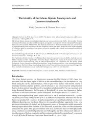 The identity of the lichens Siphula himalayensis and Lecanora ...
